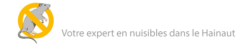 deratisation_expert_nuisible